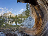 USA, California, Inyo NF. Old pine and tarn next to Garnet Lake. Photographic Print by Don Paulson
