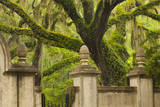USA, Georgia, Savannah, Entrance to Wormsloe Plantation. Photographic Print by Joanne Wells