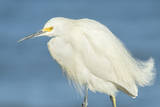 Snowy Egret at Daytona Beach, Florida, USA Photographic Print by Jim Engelbrecht