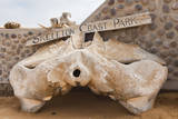Whale bone, Skeleton Coast National Park, Namibia. Photographic Print by Nico Tondini