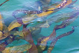 USA, Alaska, Glacier Bay National Park. Strands of kelp in clear water Photographic Print by Don Paulson