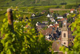 Early morning overlooking Riquewihr village, Alsace Haut-Rhin France Photographic Print by Brian Jannsen