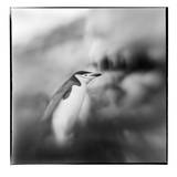 Antarctica, Deception Island, Chinstrap Penguin standing on a slope. Photographic Print by Paul Souders