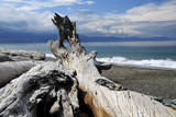Driftwood, Dungeness Spit, Strait of Juan de Fuca, Washington, USA Photographic Print by Michel Hersen