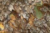Close up of bark on a tree, Great Smokey Mountains NP, Tennessee, USA Photographic Print by Joanne Wells