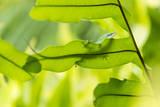 USA, Hawaii, Big Island. Day Gecko on a leaf. Photographic Print by Trish Drury