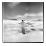 Antarctica, Torgerson Island, Adelie Penguin standing on snow. Photographic Print by Paul Souders