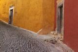 Mexico, San Miguel de Allende. Painted buildings on cobblestone street Photographic Print by Don Paulson