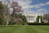 White House South Lawn and Blooming Magnolia Tree. Photographic Print by Charles Cecil