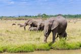 African elephant, Maasai Mara National Reserve, Kenya Photographic Print by Nico Tondini