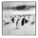 Antarctica, Deception Island, Chinstrap Penguins standing on a slope. Photographic Print by Paul Souders