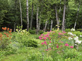 Garden and Forest in New Brunswick, Canada Photographic Print by Ellen Anon