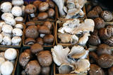 USA, California, Los Angeles, Mushroom at the Hollywood Farmers Market Photographic Print by Kymri Wilt