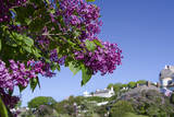 Lilac tree and historic Fort Mackinac, Mackinac Island, Michigan, USA Fotodruck von Cindy Miller Hopkins