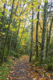 USA, Washington, Tiger Mountain Trail. Photographic Print by Jamie & Judy Wild