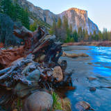 USA, California. Tree roots in Merced river in the Yosemite Valley. Photographic Print by Anna Miller
