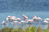 USA, Florida, Merritt Island, NWF, Roseate Spoonbills Photographic Print by Jim Engelbrecht