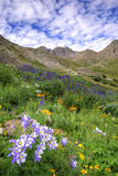 USA, Colorado. Wildflowers in American Basin in the San Juan Mountains Photographic Print by Dennis Flaherty