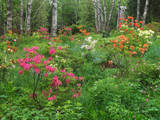 Canada, New Brunswick, Kingston, Shampers Bluff garden and forest. Photographic Print by Ellen Anon
