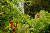 Lovely Rainbow Falls in Wailuku State Park on the edge of Hilo, Hawaii Photographic Print by Jerry Ginsberg
