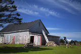 Weathered barn and horse, Guysborough County, Nova Scotia, Canada Photographic Print by Kymri Wilt