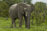 Elephant beside the Nata-Kasane Road, Botswana, Africa Photographic Print by David Wall