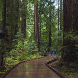 USA, California. Path among redwoods in Muir Woods National Monument. Photographic Print by Anna Miller