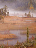 Canada, BC, Mount Robson Provincial Park. Wetlands in autumn color. Photographic Print by Don Paulson