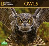 Owls - 2015 Calendar Calendars