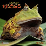 Amazing Frogs - 2015 Calendar Calendars