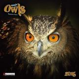 Magic Owls - 2015 Calendar Calendars