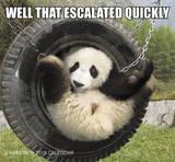 Animal Memes - 2015 Mini Calendar Calendriers