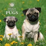 Pugs - 2015 Calendar Calendars