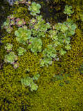 Moss and lichen covered rock, California, USA Photographic Print by Anna Miller