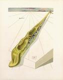 Divine Comedie, Enfer 14: Blasphemateurs Samletrykk av Salvador Dalí