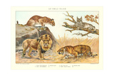The Big Cats Posters