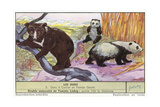 Sun Bear and Giant Panda Art