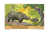 Rhinos in the Congo Prints