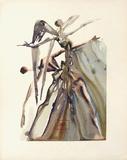 Divine Comedie, Purgatoire 04: Les NégIIgents Samlertryk af Salvador Dalí