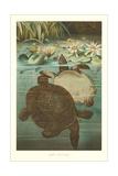 Soft Turtles Poster