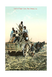 Sugar Cane Harvest, New Orleans Prints