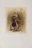 Pour Un Oiseau Futuriste Edição limitada por Renée Lubarow