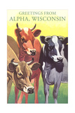 Cows, Greetings from Alpha Print