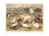 Arctic Fauna Posters