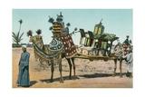 Camel-Borne Wedding Litter Poster