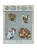 German Needlepoint Sampler Poster