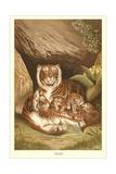 Tiger Family Prints