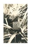 Pineapple on Plant Plakát