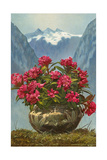 Rhododendrons in Pot by Mountains Poster