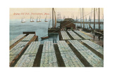 Drying Cod Fish, Provincetown Posters